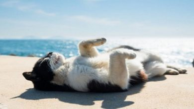 Photo of Why Cats Love To Sunbathe?