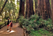 Photo of 4 Ways to Experience the Giant Redwoods