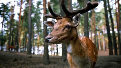 Photo of 3 Things To Consider While Deer Hunting