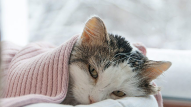 Photo of My Cat's Being Sick! Is It Serious?