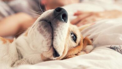Photo of Top Reasons Why You Should Consider Fostering Dogs